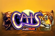Cats Slot by IGT